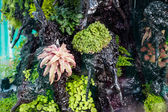 Tropical Acquarium — Foto Stock