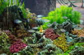Tropical Acquarium — Stock Photo