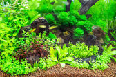 Tropisch aquarium — Stockfoto