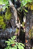 Tropical Acquarium — Stock Photo
