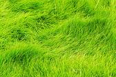 čerstvé zelené trávy — Stock fotografie