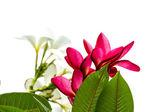 Vackra orkidé blommor — Stockfoto