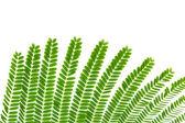 Textura de folhas pequenas — Fotografia Stock