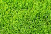 Fresh green grass texture — Stock Photo
