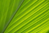 Green leave texture — Stockfoto