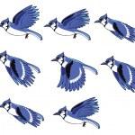 Blue Jay Bird Flying Animation — Stock Vector
