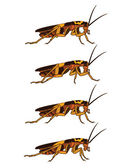 Walking Cockroach Animation Sprite — Stock Vector