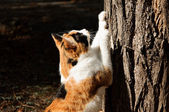 Cat scrathing tree — Stock Photo