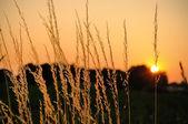 Bir yaz gün batımı arka planda çimen — Stok fotoğraf