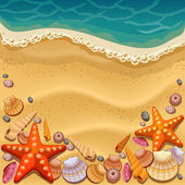 Shells on the beach — Stock Vector