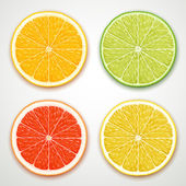 Vector citrus slices — Stock Vector