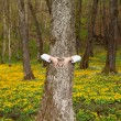 Stock Photo: Happy mhugging tree in forest