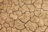 Cracked and dried mud texture — Stock Photo