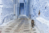 Cat on Street in medina of blue town Chefchaouen, Morocco — Stock Photo
