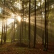 Beautiful morning scene in the forest with sun rays and fog — Stock Photo
