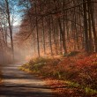 Alley in the forest with fog in fall — Stock Photo