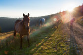 Herd of horses with colts grazing in mountains — Stock Photo