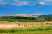Small scale farming with tractor and plow in field with stork an — Stock Photo