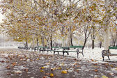 Park with bench on winter with yellow leafs — Stock Photo