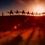 Camel caravan going through the desert — Stock Photo