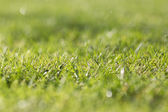Wet grass after the rain — Stock Photo