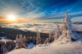 Winter sunrise over the clouds with fir full of snow — Stock Photo