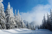 Road in mountain full of snow with firs  — Stock Photo