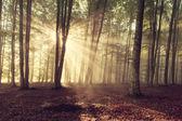 Alberi della foresta d'autunno. Sfondi di natura verde e legno del sole. — Foto Stock