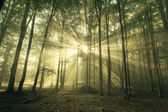 Autumn forest trees. nature green wood sunlight backgrounds. — Stock Photo
