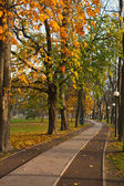Path in autumn Park — Stock Photo