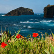 Stock Photo: Red poppies on seacoast