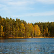 Forest lake in autumn — Stock Photo