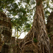 Ta Prohm temple — Stock Photo #37678949