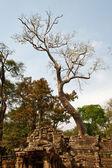 Büyük yaşlı olarak ta prohm tapınağı ağaç — Stok fotoğraf