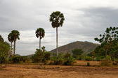 Cambodian landscape — Stock Photo