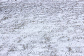 Winter in steppe — Stock Photo
