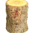 Stock Photo: Stump isolated