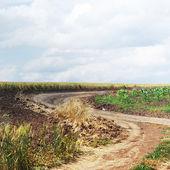 Chemin de terre vide — Photo