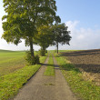 Stock Photo: Farm Road