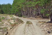 Forestry Road in Pine Wood — Stock Photo