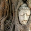 Head of Buddha image — Foto Stock