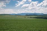 Agricultura — Foto de Stock