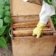 Stock Photo: Apiarist and box with honeycombs