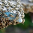 Bees at the beehive — Stockfoto