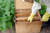 Apiarist and box with honeycombs — Stock Photo