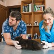 Stock Photo: Veterinarians