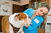 Veterinarians — Stock Photo