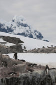 Mountains in Antarctic — 图库照片