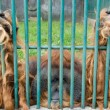 Sad monkey in the zoo — Stockfoto