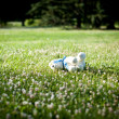 Royalty-Free Stock Photo: Children\'s toy dog on the grass in a summer park